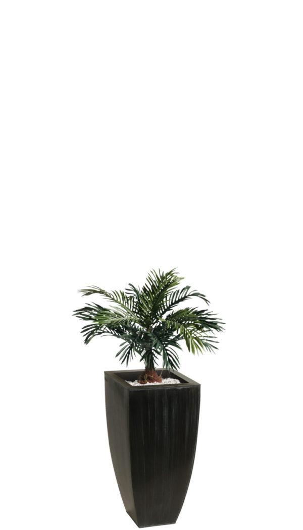 Cykasová palma