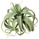 Umelá rastlina Kumari